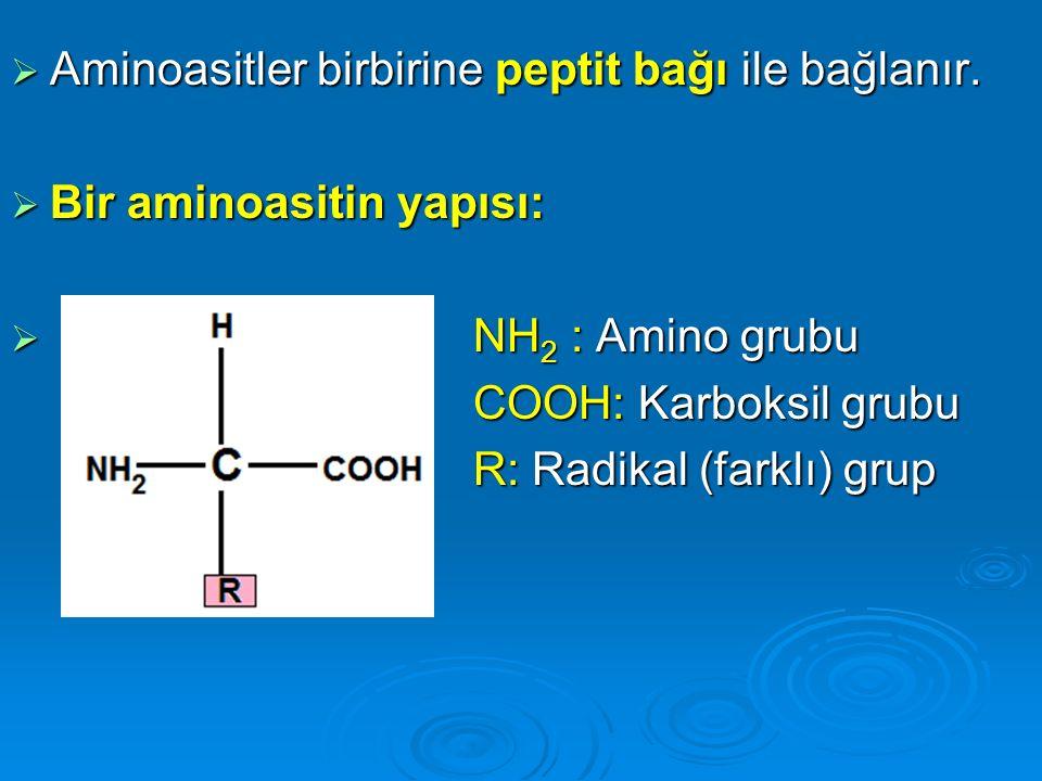  Aminoasitler birbirine peptit bağı ile bağlanır.  Bir aminoasitin yapısı:  NH 2 : Amino grubu COOH: Karboksil grubu COOH: Karboksil grubu R: Radik