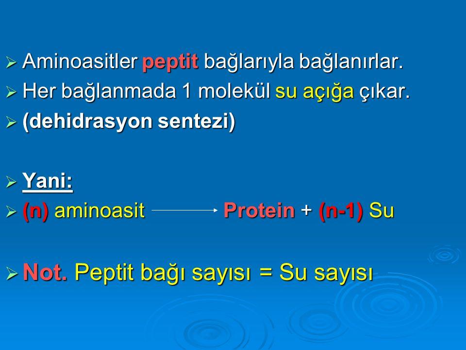  9001 molekül aminoasit kullanılmasıyla oluşan bir protein sentezinde, açığa çıkan su kullanılarak kaç molekül yağ hidroliz edilebilir.