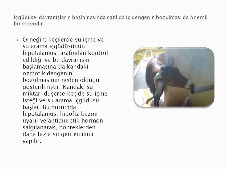  Örneğin; keçilerde su içme ve su arama içgüdüsünün hipotalamus tarafından kontrol edildiği ve bu davranışın başlamasına da kandaki ozmotik dengenin