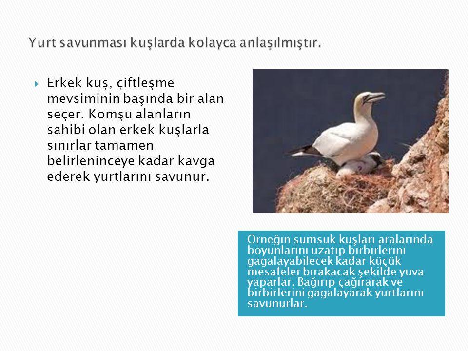 Örneğin sumsuk kuşları aralarında boyunlarını uzatıp birbirlerini gagalayabilecek kadar küçük mesafeler bırakacak şekilde yuva yaparlar. Bağırıp çağır