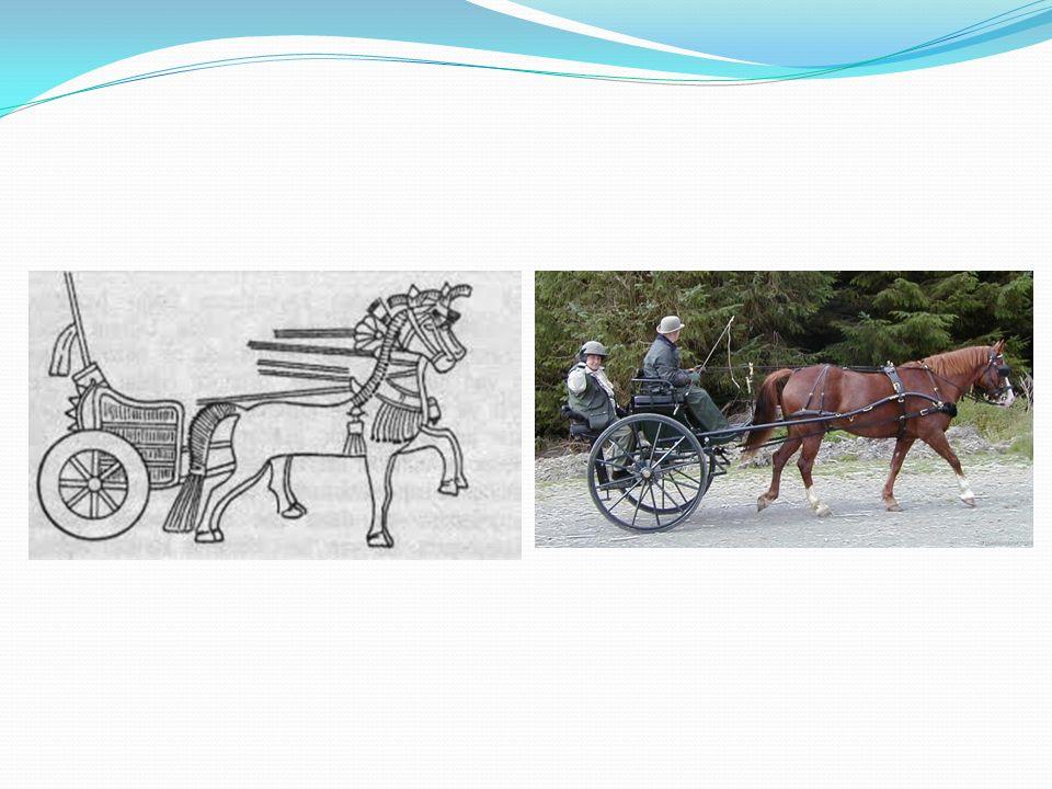 Günümüzde at arabaları köylerde ve kasabalarda kullanılmaktadır.