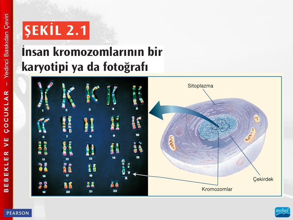 Genetik Temeller Çekirdek bazlı (germline) mutasyon gametleri yetiştiren hücrelerde ortaya çıkar; somatik mutasyon, hayatın herhangi bir anında vücut hücrelerinde ortaya çıkabilir.