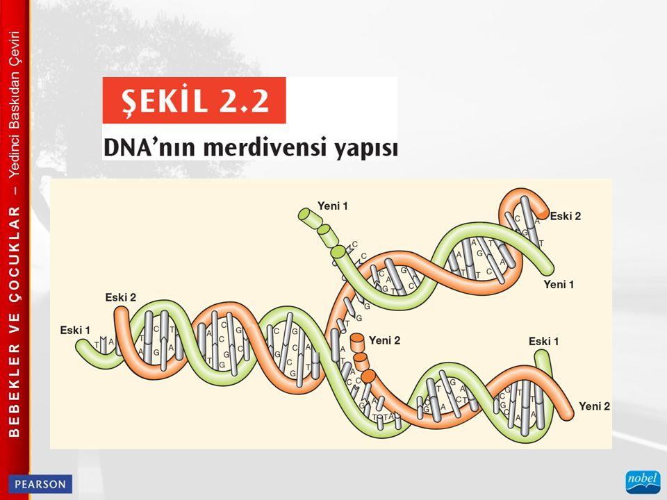 İnsanlar arasında sürekli olarak değişen zekâ ve kişilik gibi insani özellikler, çoklu kalıtımdan; birçok genin etkilerinden kaynaklanır.