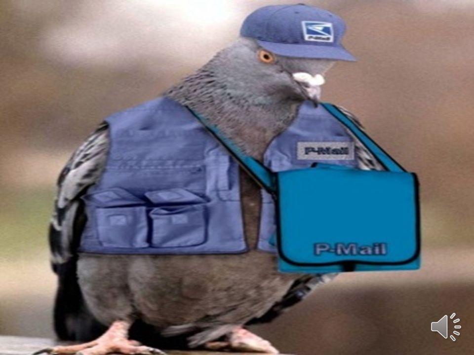 KUŞLARLA HABERLEŞME Posta güvercini kavramı oldukça geniş bir anlam gelmektedir. Çok eski dönemlerden beri çeşitli güvercin ırkları dünyada posta güve