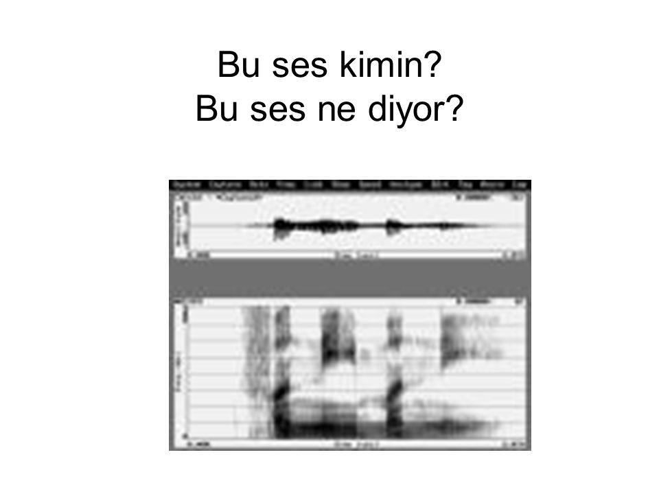 Bu ses kimin? Bu ses ne diyor?