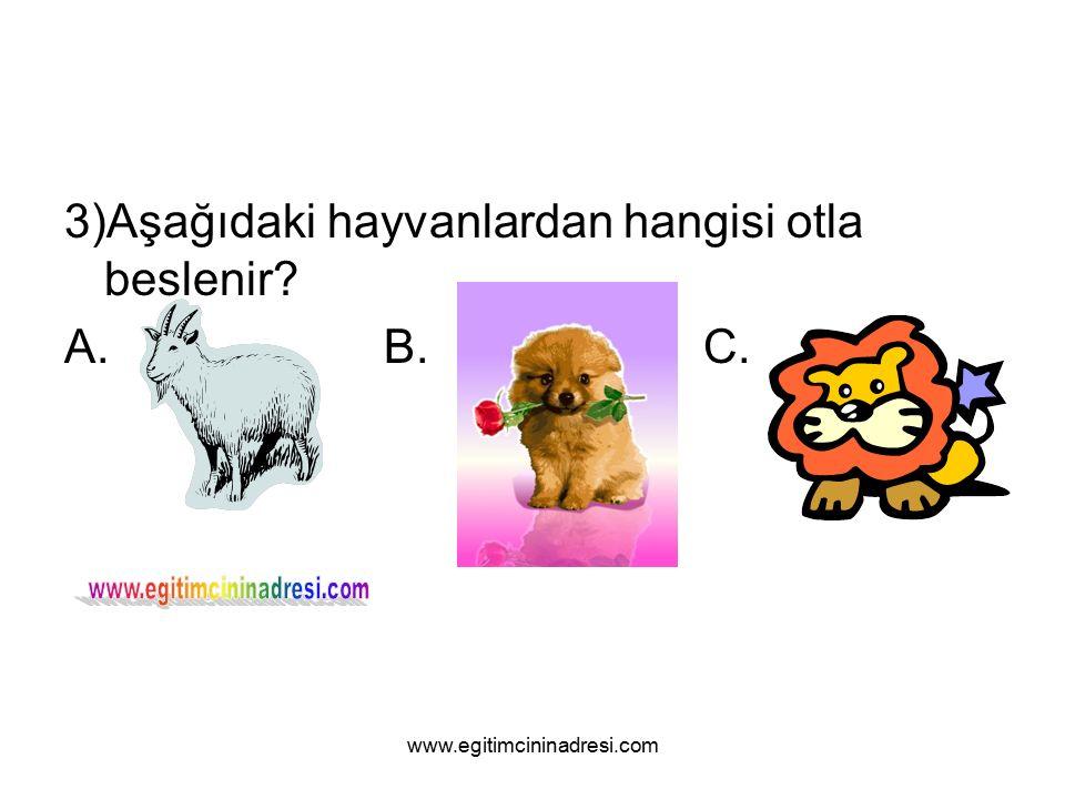 3)Aşağıdaki hayvanlardan hangisi otla beslenir A.B.C. www.egitimcininadresi.com