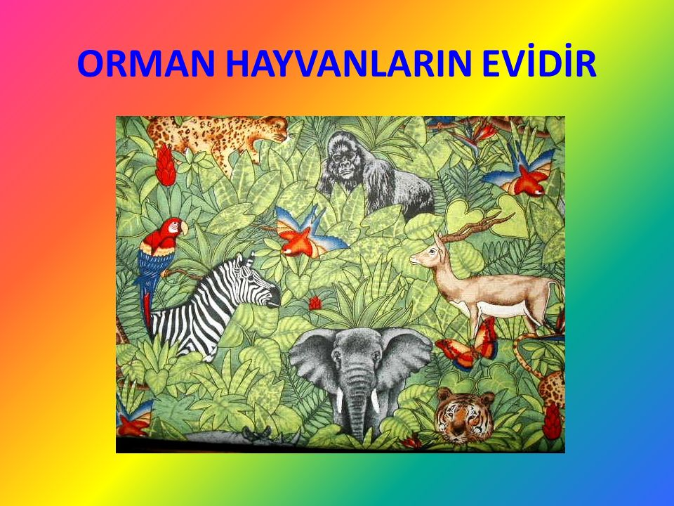 ORMAN HAYVANLARIN EVİDİR