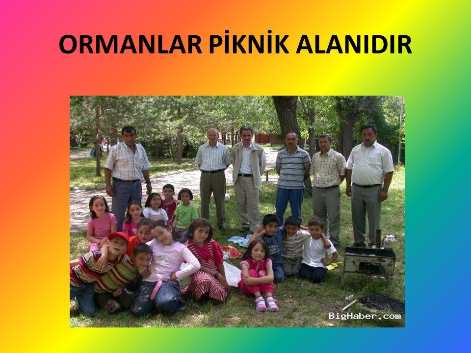 ORMANLAR PİKNİK ALANIDIR