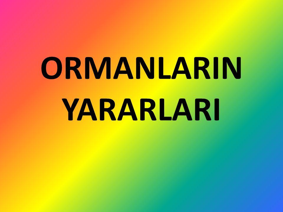 ORMANLARIN YARARLARI