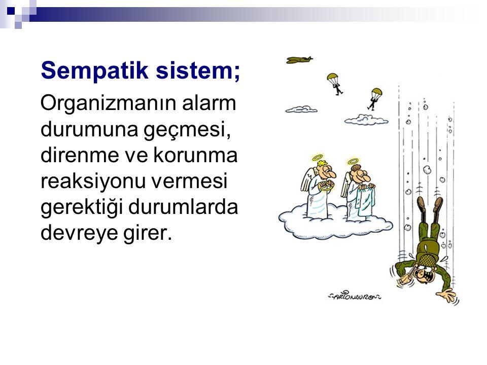 Sempatik sistem; Organizmanın alarm durumuna geçmesi, direnme ve korunma reaksiyonu vermesi gerektiği durumlarda devreye girer.