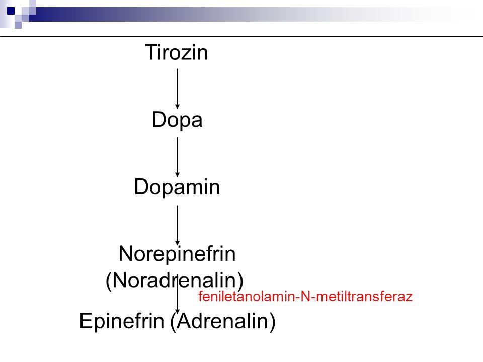 Tirozin Dopa Dopamin Norepinefrin (Noradrenalin) Epinefrin (Adrenalin) feniletanolamin-N-metiltransferaz