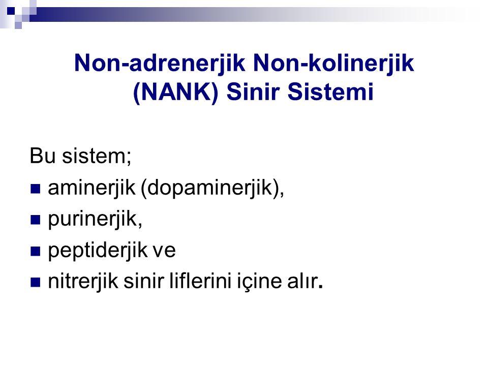 Non-adrenerjik Non-kolinerjik (NANK) Sinir Sistemi Bu sistem; aminerjik (dopaminerjik), purinerjik, peptiderjik ve nitrerjik sinir liflerini içine alı