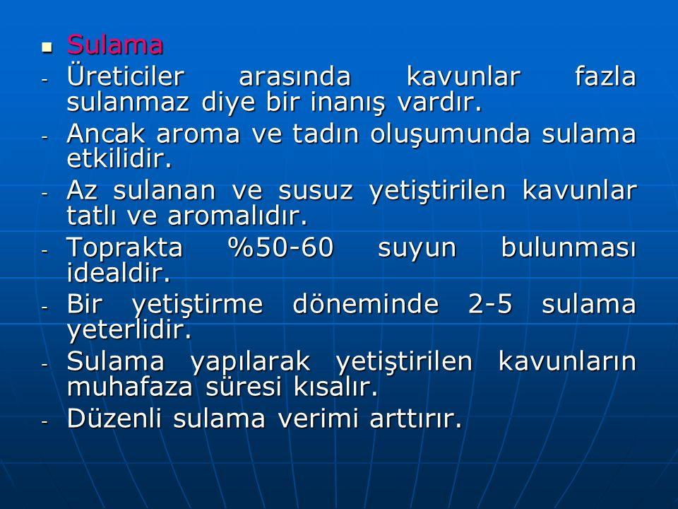 Sulama Sulama - Üreticiler arasında kavunlar fazla sulanmaz diye bir inanış vardır.