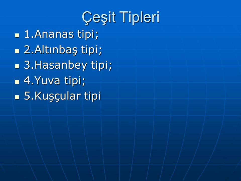 Çeşit Tipleri 1.Ananas tipi; 1.Ananas tipi; 2.Altınbaş tipi; 2.Altınbaş tipi; 3.Hasanbey tipi; 3.Hasanbey tipi; 4.Yuva tipi; 4.Yuva tipi; 5.Kuşçular tipi 5.Kuşçular tipi