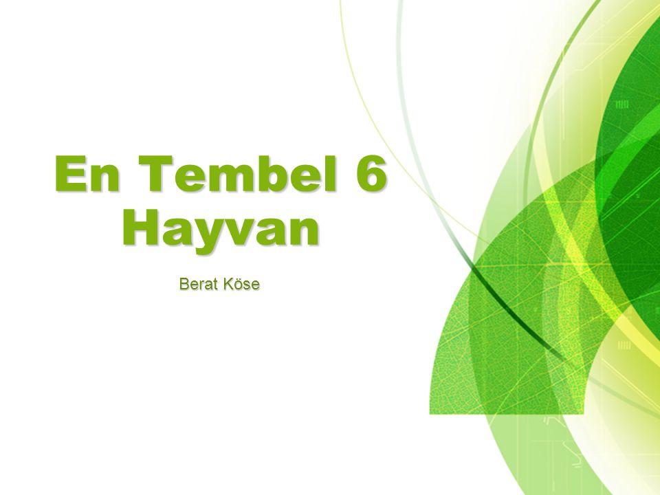 En Tembel 6 Hayvan Berat Köse