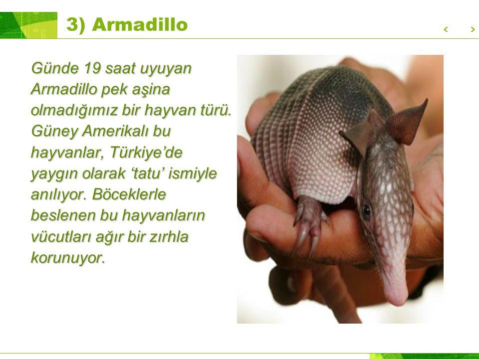 3) Armadillo Günde 19 saat uyuyan Armadillo pek aşina olmadığımız bir hayvan türü.