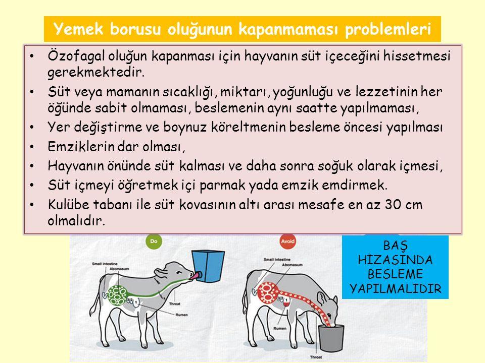 Yemek borusu oluğunun kapanmaması problemleri Özofagal oluğun kapanması için hayvanın süt içeceğini hissetmesi gerekmektedir.