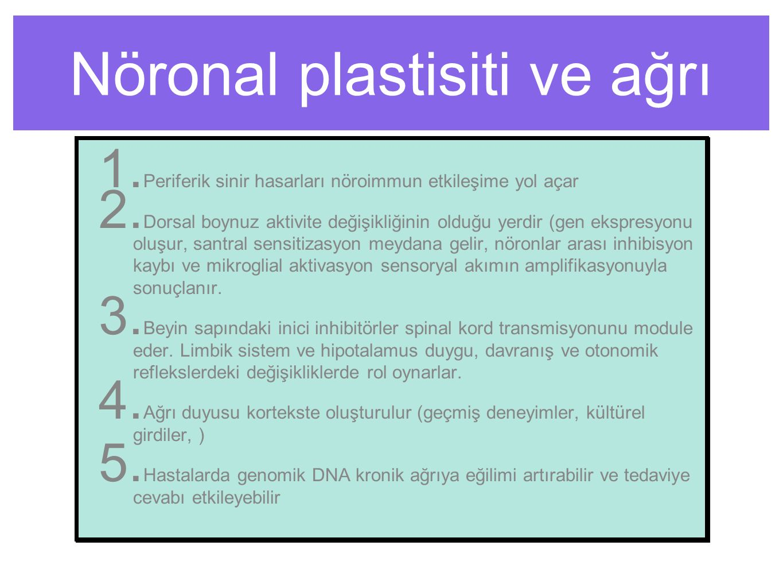 Nöronal plastisiti ve ağrı 1. Periferik sinir hasarları nöroimmun etkileşime yol açar 2.