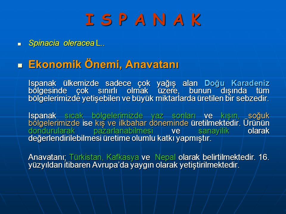 I S P A N A K Spinacia oleracea L.. Spinacia oleracea L..