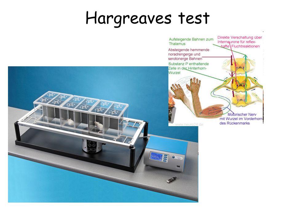 Mekanik bası ile oluşan ağrıyı ölçmekte kullanılan başlıca modeldir.