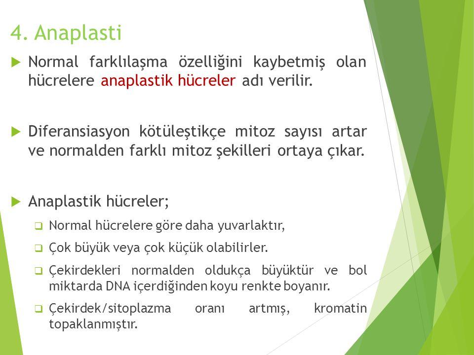 4. Anaplasti  Normal farklılaşma özelliğini kaybetmiş olan hücrelere anaplastik hücreler adı verilir.  Diferansiasyon kötüleştikçe mitoz sayısı arta