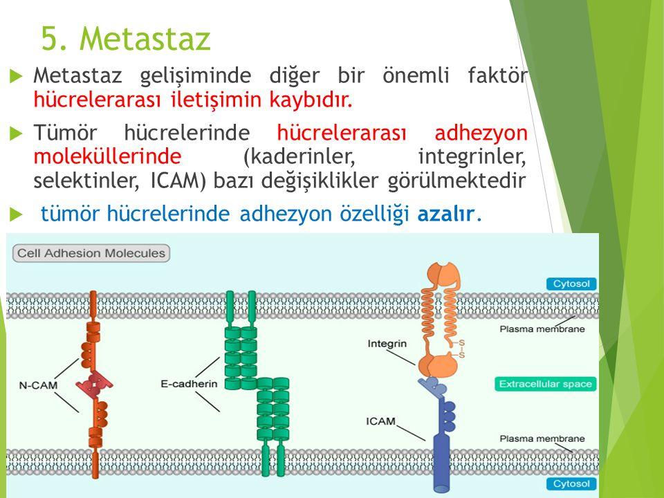 5. Metastaz  Metastaz gelişiminde diğer bir önemli faktör hücrelerarası iletişimin kaybıdır.  Tümör hücrelerinde hücrelerarası adhezyon moleküllerin