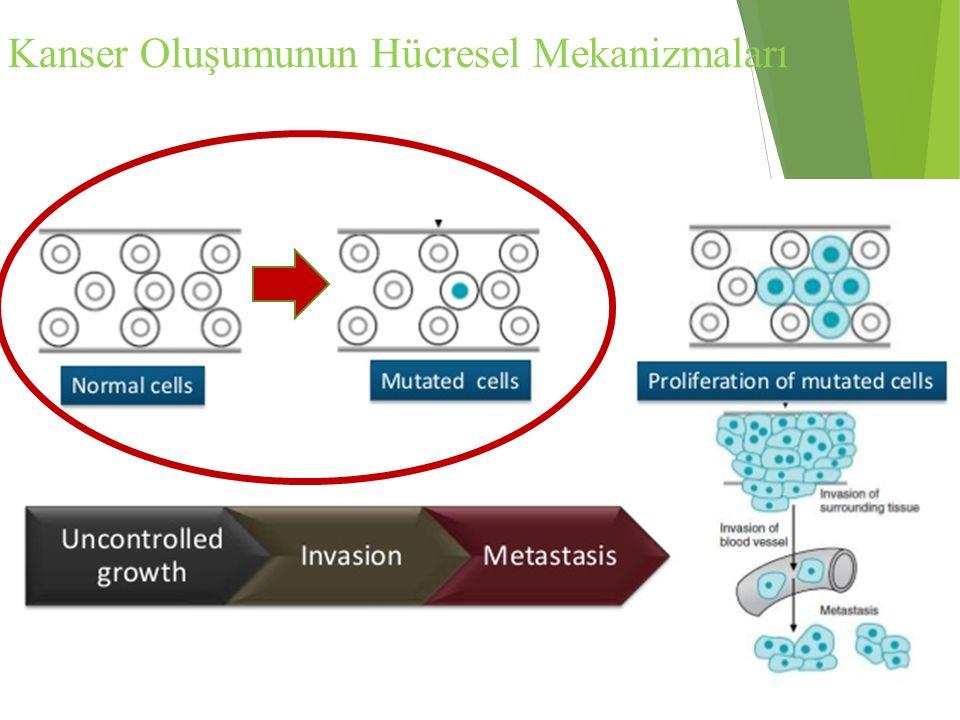 Kanser Oluşumunun Hücresel Mekanizmaları
