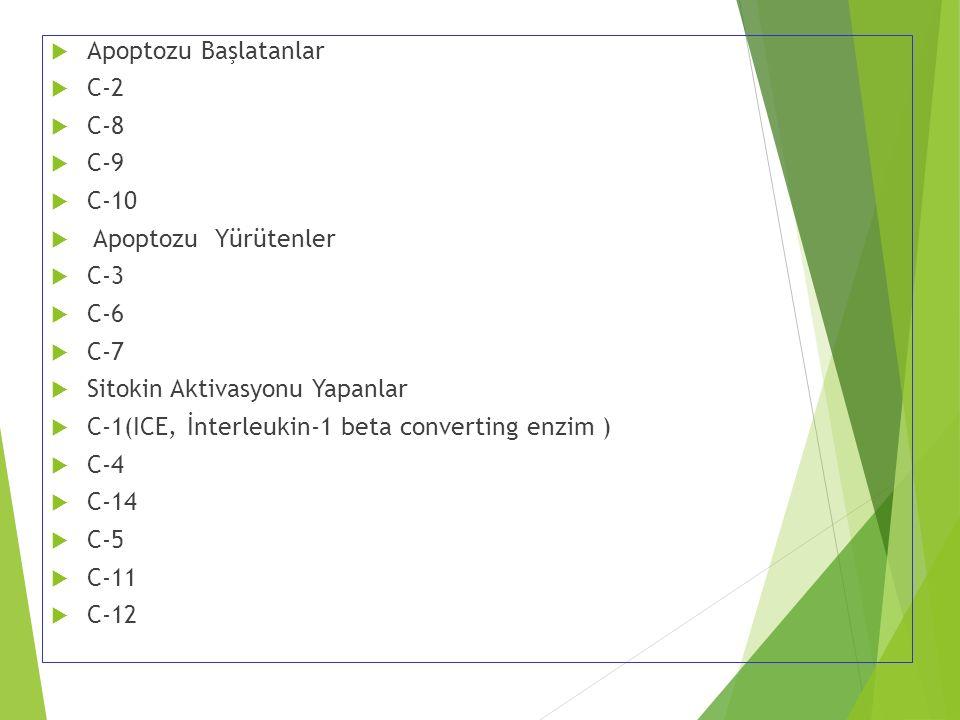  Apoptozu Başlatanlar  C-2  C-8  C-9  C-10  Apoptozu Yürütenler  C-3  C-6  C-7  Sitokin Aktivasyonu Yapanlar  C-1(ICE, İnterleukin-1 beta c