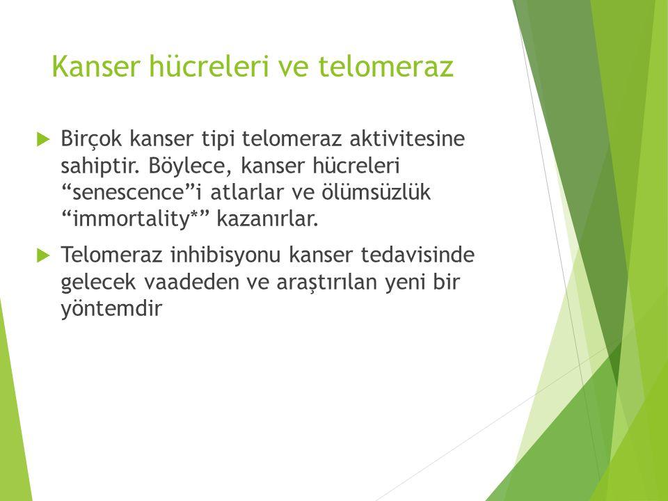 """Kanser hücreleri ve telomeraz  Birçok kanser tipi telomeraz aktivitesine sahiptir. Böylece, kanser hücreleri """"senescence""""i atlarlar ve ölümsüzlük """"im"""