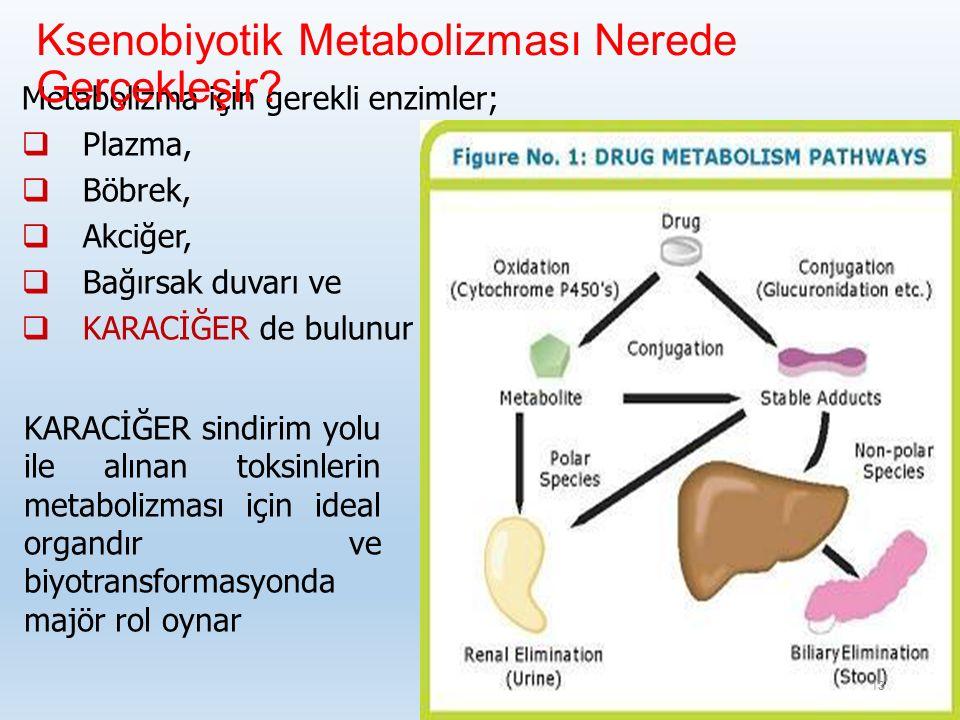 Metabolizma için gerekli enzimler;  Plazma,  Böbrek,  Akciğer,  Bağırsak duvarı ve  KARACİĞER de bulunur Ksenobiyotik Metabolizması Nerede Gerçekleşir.