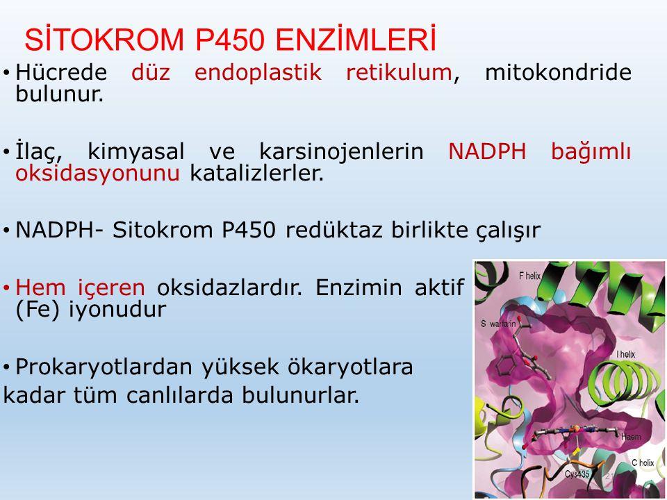 SİTOKROM P450 ENZİMLERİ Hücrede düz endoplastik retikulum, mitokondride bulunur.