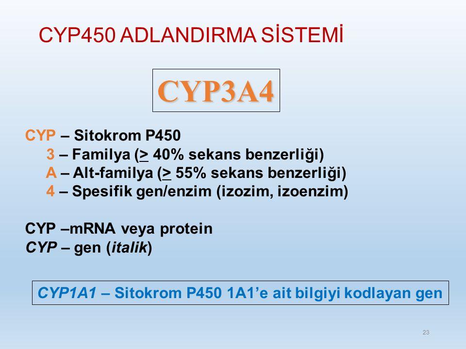 CYP450 ADLANDIRMA SİSTEMİ CYP3A4 CYP – Sitokrom P450 3 – Familya (> 40% sekans benzerliği) A – Alt-familya (> 55% sekans benzerliği) 4 – Spesifik gen/enzim (izozim, izoenzim) CYP –mRNA veya protein CYP – gen (italik) CYP1A1 – Sitokrom P450 1A1'e ait bilgiyi kodlayan gen 23