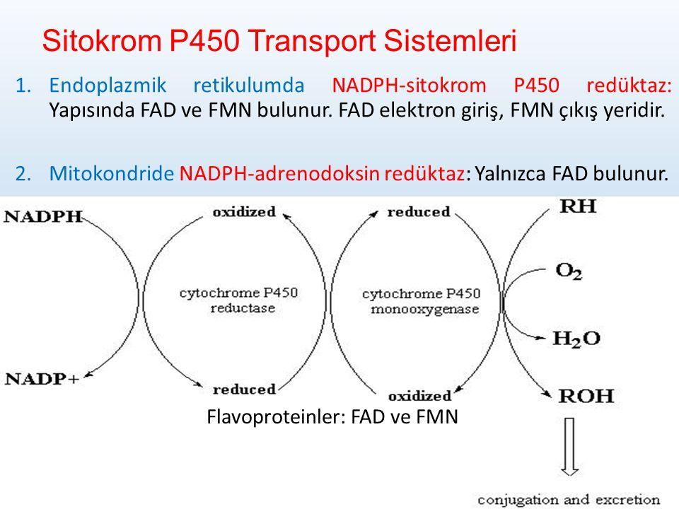 Sitokrom P450 Transport Sistemleri 1.Endoplazmik retikulumda NADPH-sitokrom P450 redüktaz: Yapısında FAD ve FMN bulunur.