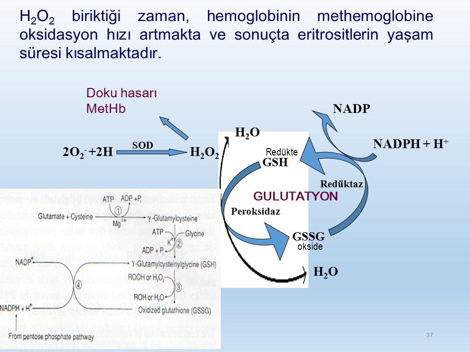 Doku hasarı MetHb H2O2H2O2 SOD 2O 2 - +2H H2OH2O H2OH2O GSH GSSG Peroksidaz Redüktaz GULUTATYON NADP NADPH + H + okside Redükte H 2 O 2 biriktiği zaman, hemoglobinin methemoglobine oksidasyon hızı artmakta ve sonuçta eritrositlerin yaşam süresi kısalmaktadır.