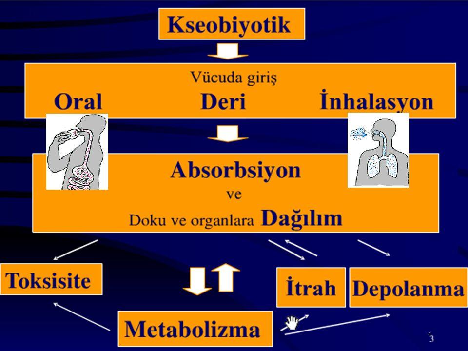 Ksenobiyotikler Yüksek lipofilik bileşikler Lipofilik bileşikler Polar bileşikler FAZ I biotransformasyon (oksidasyon, redüksiyon, hidroliz) FAZ II biotransformasyon (Konjugasyon) Böbrek ve safra yolları ile atılım Hidrofilik bileşikler 15