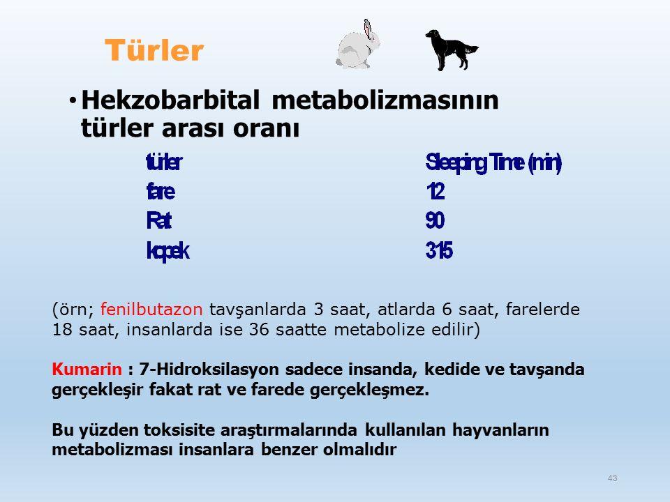 (örn; fenilbutazon tavşanlarda 3 saat, atlarda 6 saat, farelerde 18 saat, insanlarda ise 36 saatte metabolize edilir) Kumarin : 7-Hidroksilasyon sadece insanda, kedide ve tavşanda gerçekleşir fakat rat ve farede gerçekleşmez.