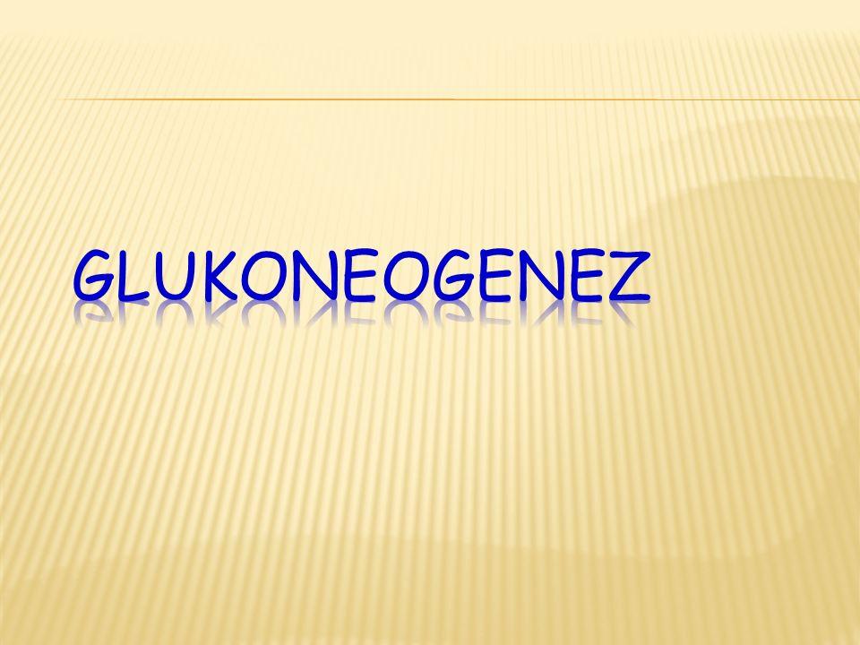 1.Karbonhidrat dışındaki maddelerden glikoz sentezine Glukoneogenez denir.