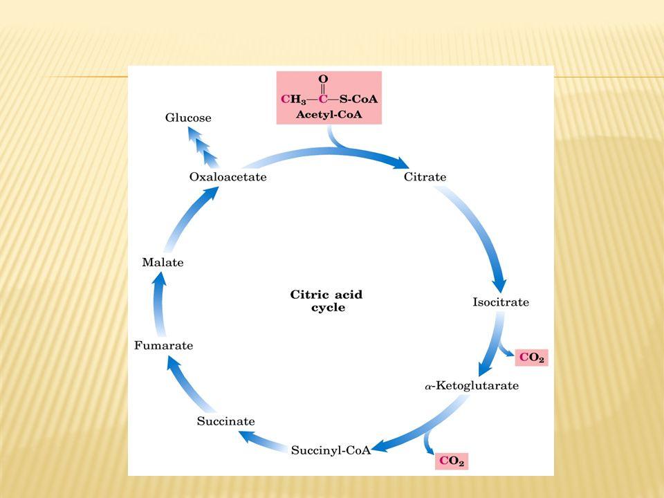 1.Hekzokinaz 2.Fosfofruktokinaz-1 (PFK-1) 3.Piruvat kinaz Glukoz-6-fosfataz Fruktoz 1,6-bisfosfataz (FBP-1) Piruvat Karboksilaz & Fosfoenolpiruvat karboksikinaz (PEPCK) Bu 3 anahtar enzim Glikoliz Glukoneogenez