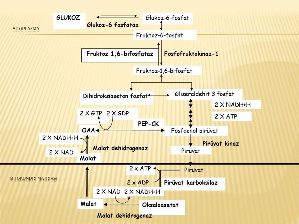  Glikolizin hız kısıtlayıcı basamağı fruktoz 6 fosfataz ile tersine çevrilir.
