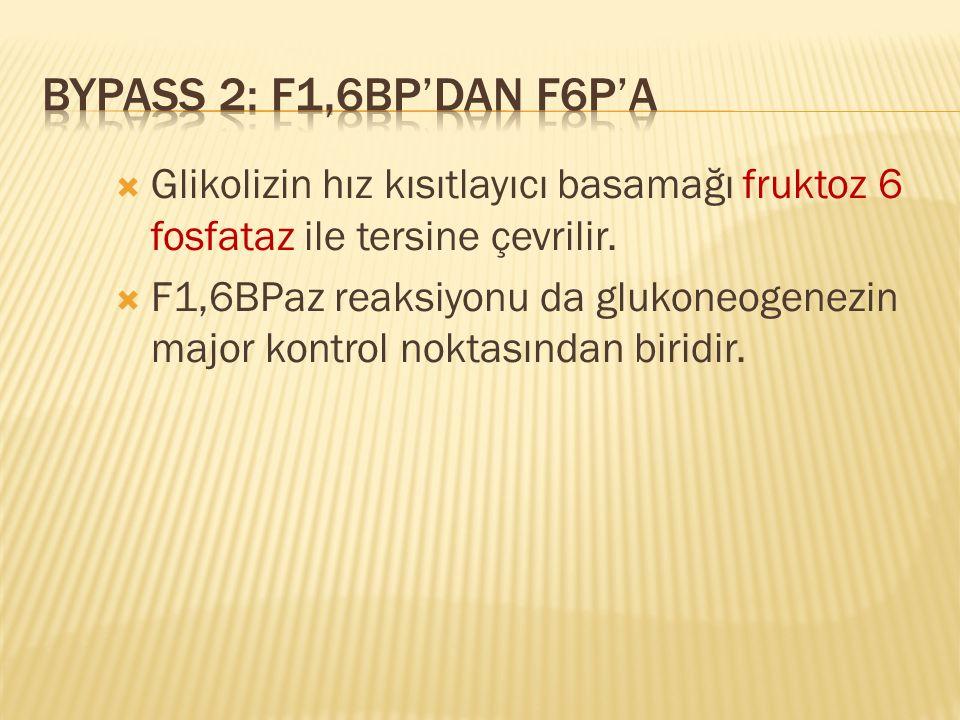 Glikolizin hız kısıtlayıcı basamağı fruktoz 6 fosfataz ile tersine çevrilir.  F1,6BPaz reaksiyonu da glukoneogenezin major kontrol noktasından biri