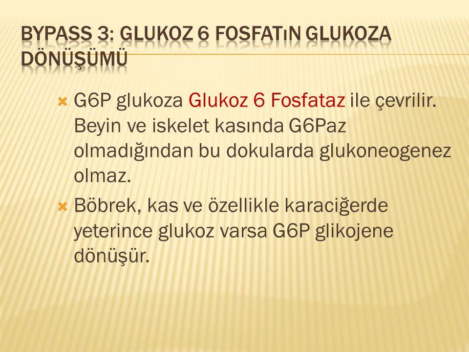  G6P glukoza Glukoz 6 Fosfataz ile çevrilir. Beyin ve iskelet kasında G6Paz olmadığından bu dokularda glukoneogenez olmaz.  Böbrek, kas ve özellikle