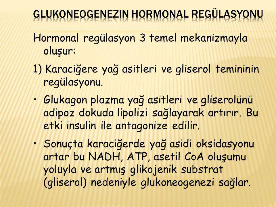 Hormonal regülasyon 3 temel mekanizmayla oluşur: 1) Karaciğere yağ asitleri ve gliserol temininin regülasyonu. Glukagon plazma yağ asitleri ve glisero