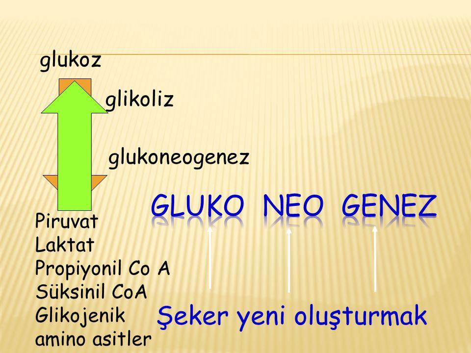 Şeker yeni oluşturmak glikoliz glukoz Piruvat Laktat Propiyonil Co A Süksinil CoA Glikojenik amino asitler glukoneogenez