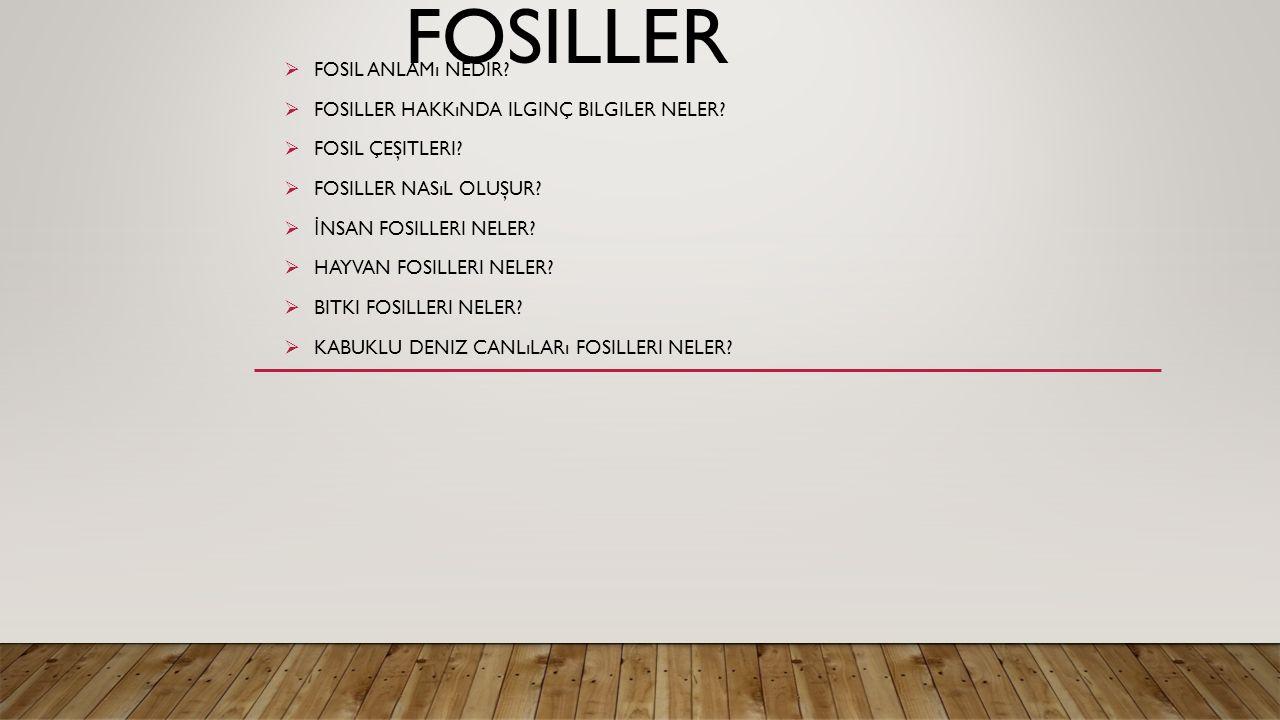 FOSILLER  FOSIL ANLAMı NEDIR. FOSILLER HAKKıNDA ILGINÇ BILGILER NELER.