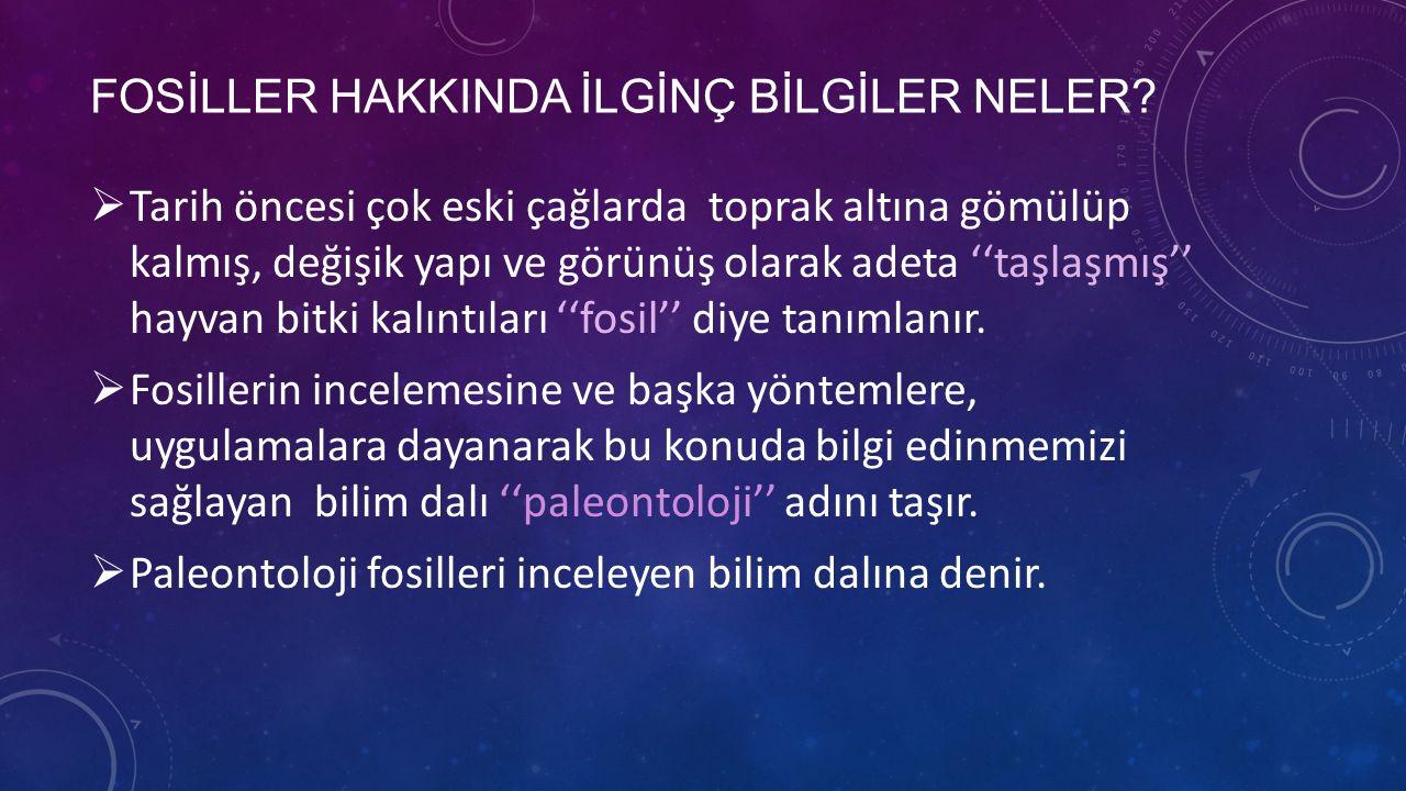 FOSİLLER HAKKINDA İLGİNÇ BİLGİLER NELER.