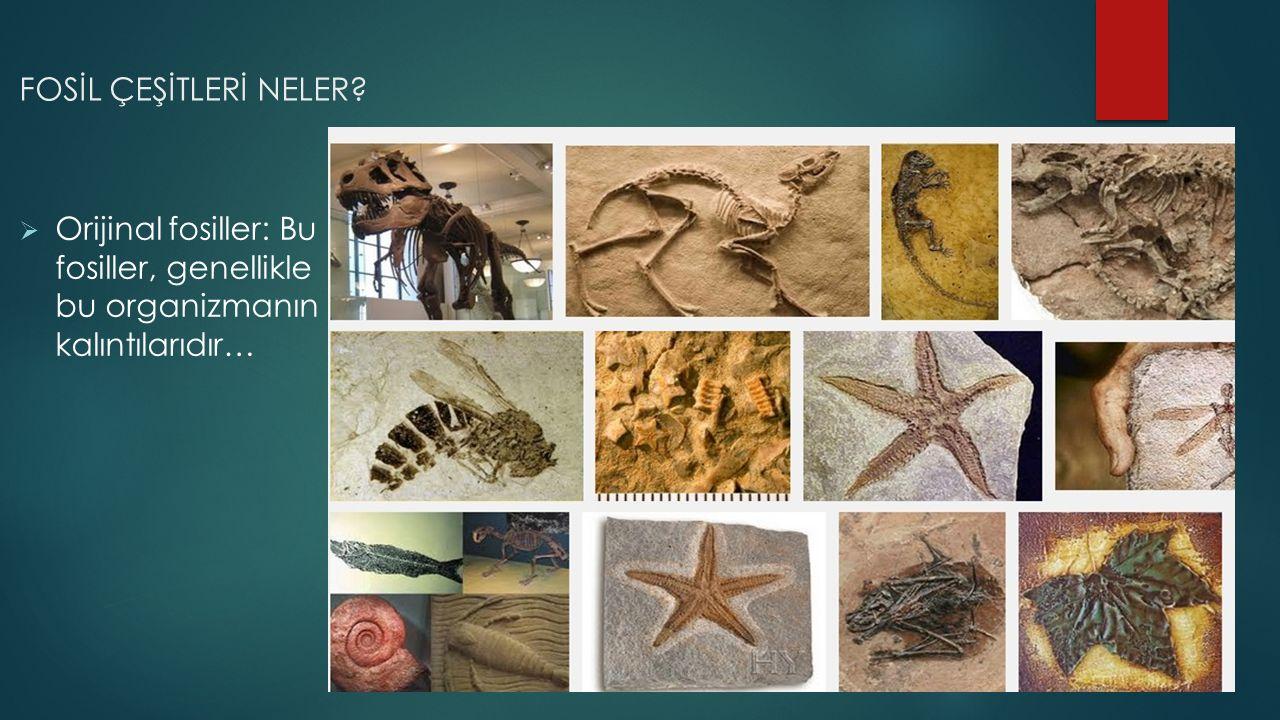 FOSİL ÇEŞİTLERİ NELER?  Orijinal fosiller: Bu fosiller, genellikle bu organizmanın kalıntılarıdır…