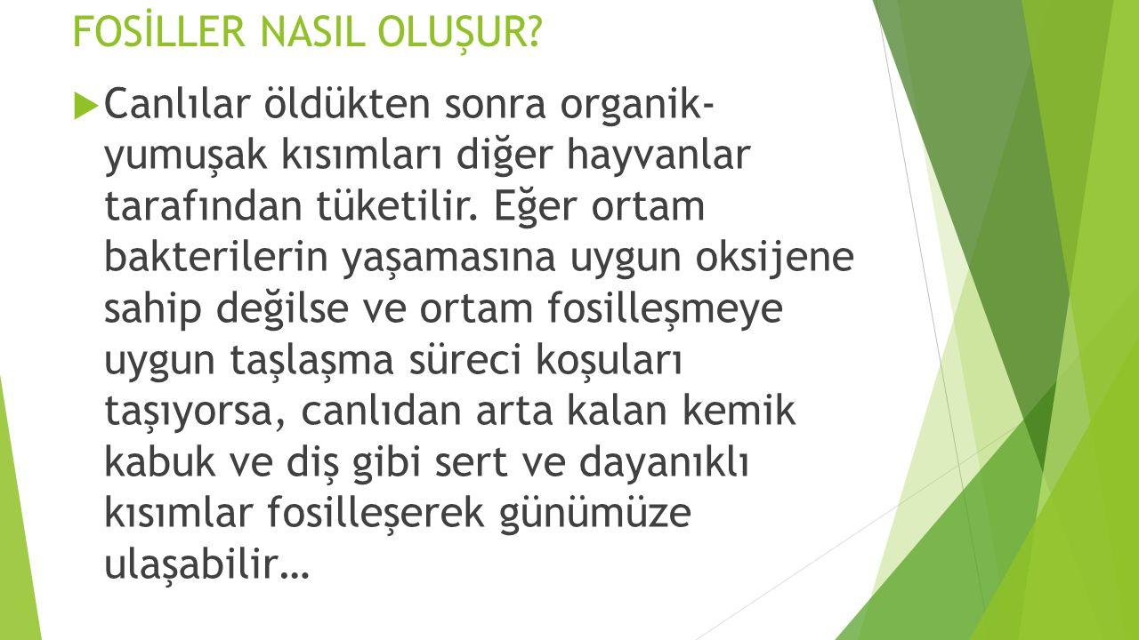 FOSİLLER NASIL OLUŞUR.