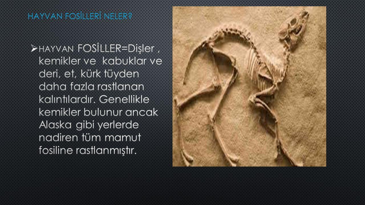 HAYVAN FOSİLLER=Dişler, kemikler ve kabuklar ve deri, et, kürk tüyden daha fazla rastlanan kalıntılardır.
