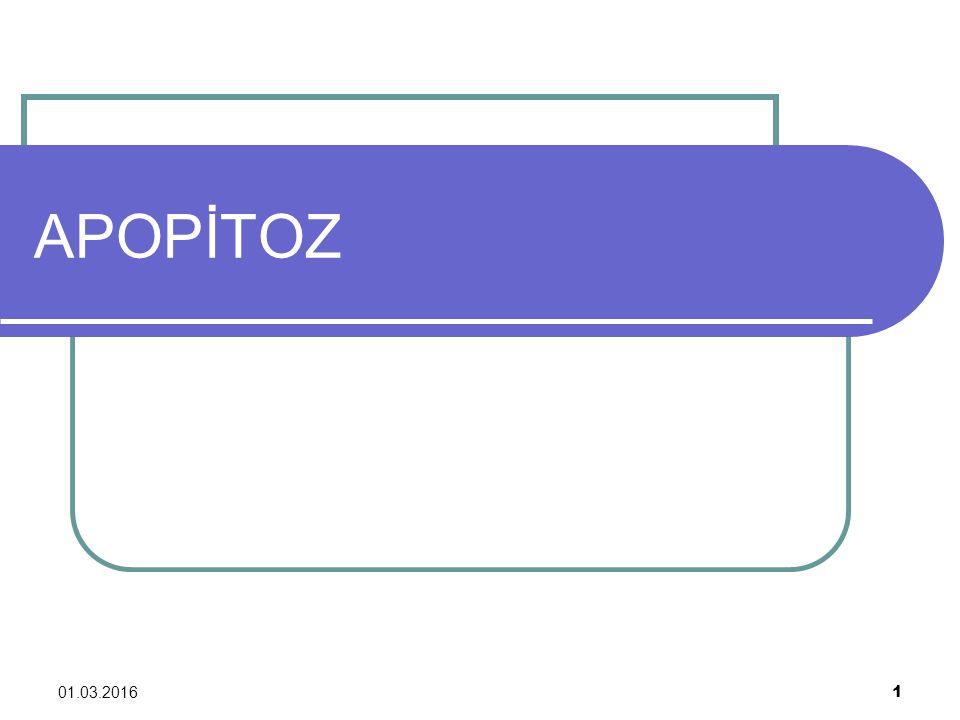 01.03.2016 2 Apopitozis veya Apopitoz, Yunanca: apoptosis yani (ayrılarak) düşmek , apo= - den/-dan ve ptosis= düşmek Yunanca Programlanmış hücre ölümünün ana tiplerinden biridir.