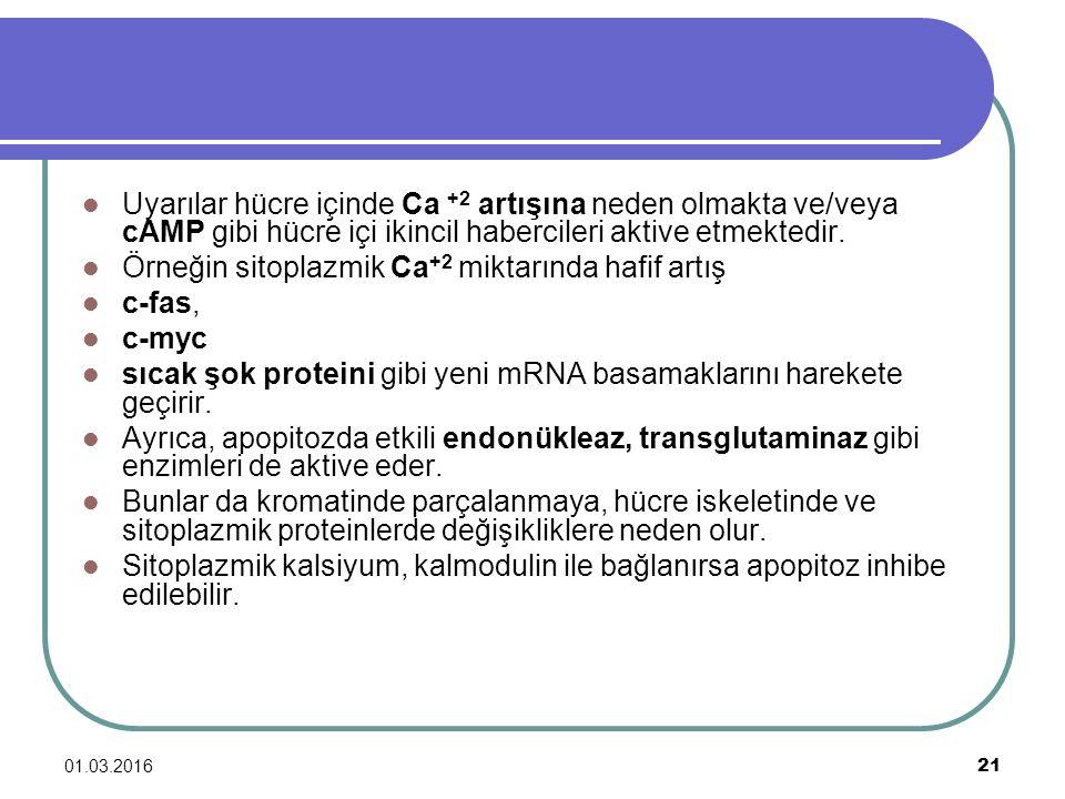 01.03.2016 21 Uyarılar hücre içinde Ca +2 artışına neden olmakta ve/veya cAMP gibi hücre içi ikincil habercileri aktive etmektedir. Örneğin sitoplazmi